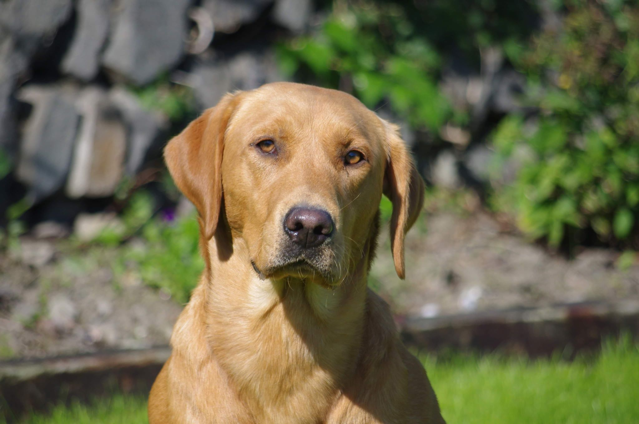 Sire Of Furkids Born On 5th Of June 2019